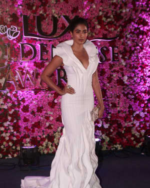Pooja Hegde - Photos: Red Carpet Of Lux Golden Rose Awards 2017