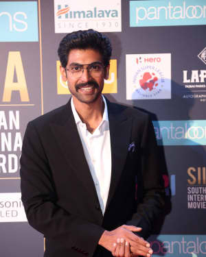 Rana Daggubati - Photos: SIIMA Awards 2018 Red Carpet - Day 2